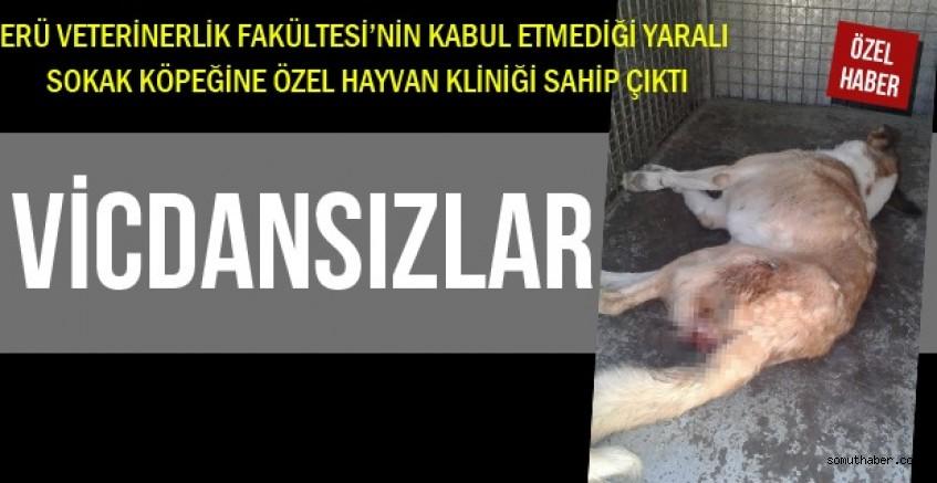 ERÜ Veterinerlik Fakültesi Yaralı Köpeği Tedavi Etmedi!