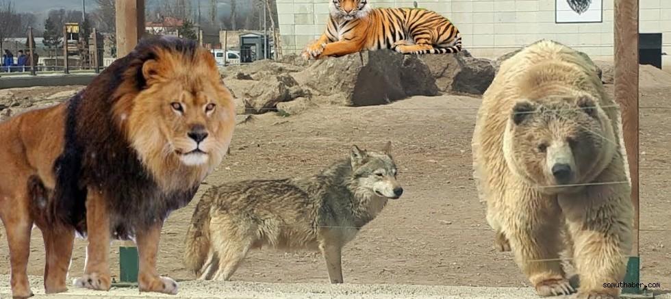 Hayvanseverler: Kayseri Hayvanat Bahçesi Kapatılsın