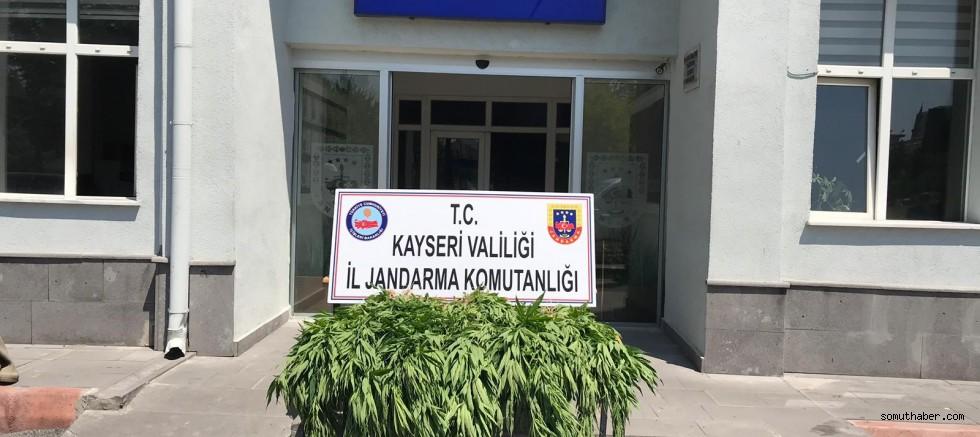 Kayseri'de Kenevir Operasyonu: 1 Gözaltı