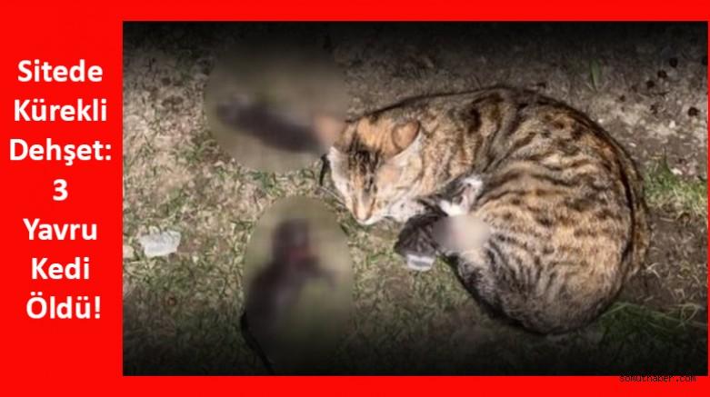 Sitede Kürekli Dehşet: 3 Yavru Kedi Öldü!
