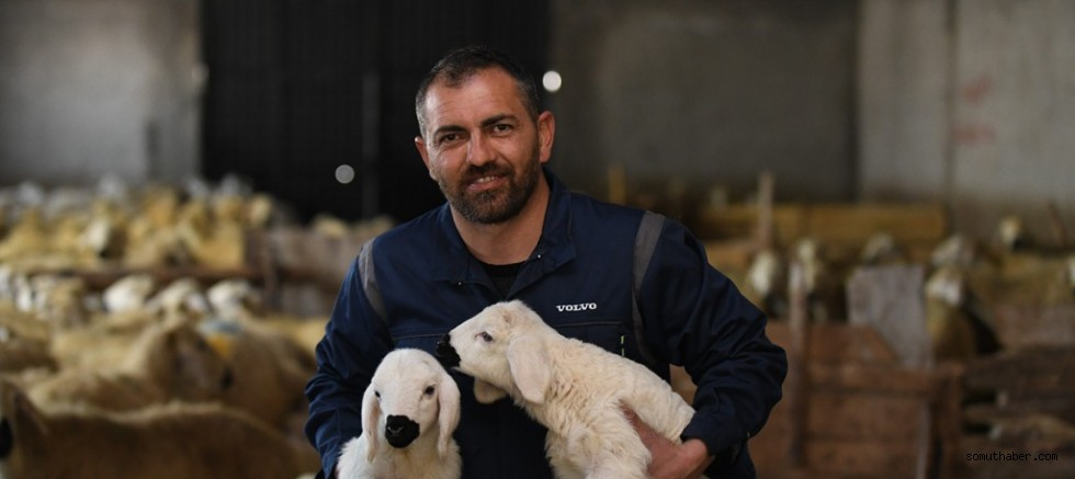 Sözleşmeli Öğretmenliği Bıraktı, 600 Koyunluk Sürünün Sahibi Oldu