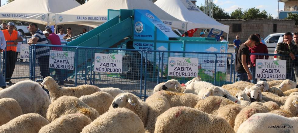 Talas'ta Hayvancılığa Destek