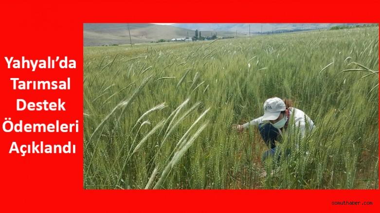 Yahyalı'da Tarımsal Destek Ödemeleri Açıklandı