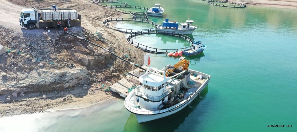 Yamula Barajı'nda 1400 Ton Somon Üretildi